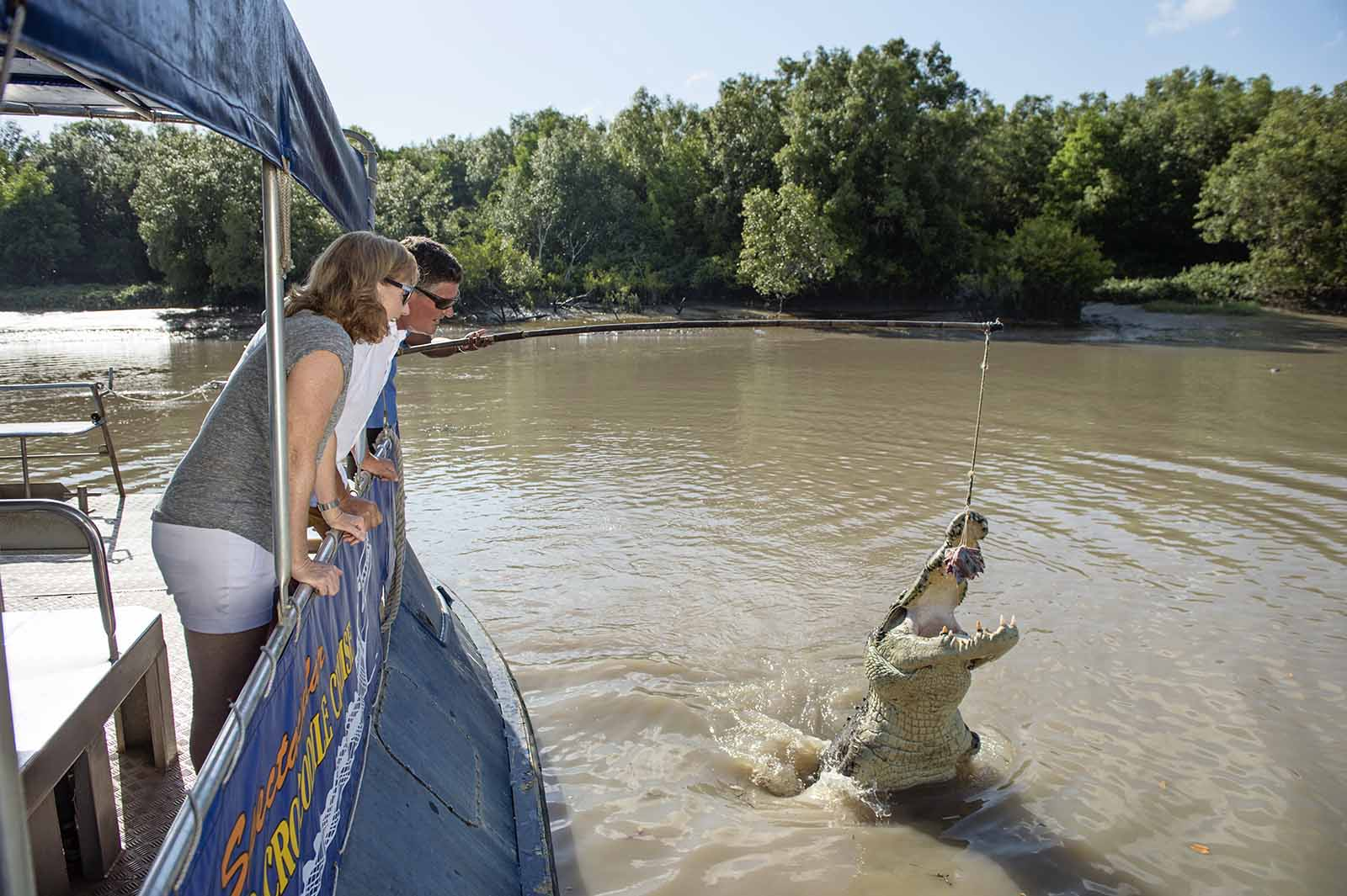Jumping crocodiles in the wild | Dawn to dusk outdoors in Darwin
