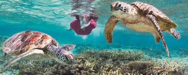 Lady Elliot Island, Southern Great Barrier Reef | 10 Green Getaways