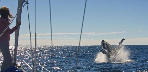 Sailing with whales | Whale watching three ways